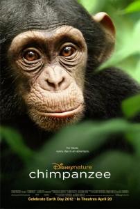 chimpanzee-poster